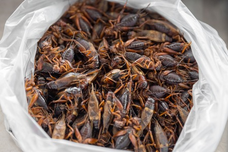 Fried grasshopper, fried insect, Thailand unusual food
