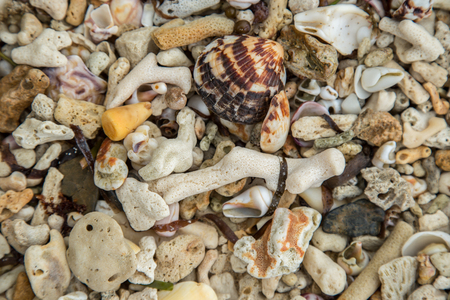 Summer background Close up of seashells and corals