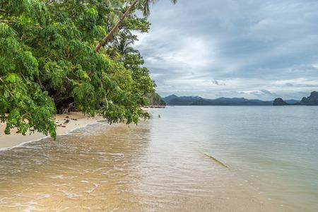 Leaning trees above the sea and the beach, rainy day. El Nido, Palawan, Philippines. 版權商用圖片