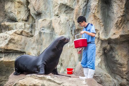 A man feeds a seal in Ocean park. Hong Kong, China. July 2018 版權商用圖片 - 137283398