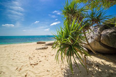 Palms, sea and beautiful tropical secret beach