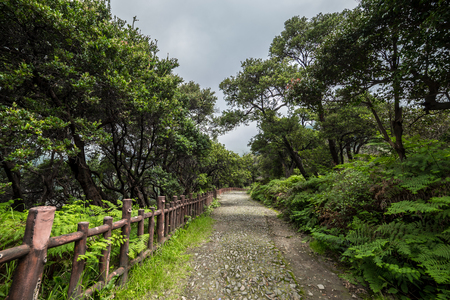 A walking path and fence in a tropical forest 版權商用圖片