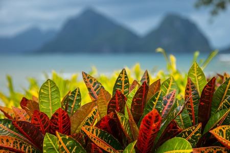 Turquoise sea and mountain background with tropical colorful leaves foreground in El Nido, Philippines 版權商用圖片