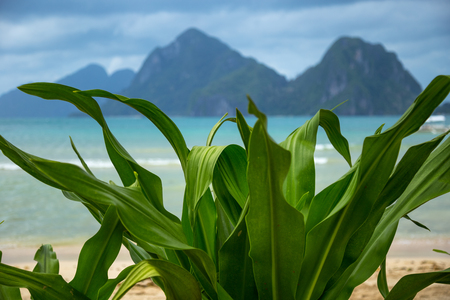 Turquoise sea and mountain background with tropical flowers leaves foreground in El Nido, Philippines