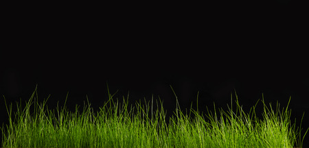 green plants: Green grass on a black background