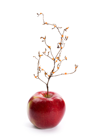 Ripe red apple with a plant like a tree. Imagens