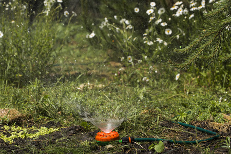 Watering the growing cucumbers with a universal garden sprinkler