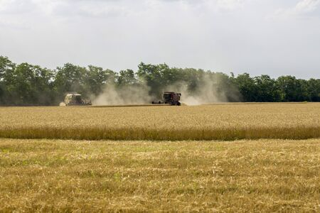 Harvesting wheat with agricultural machinery in the field Фото со стока