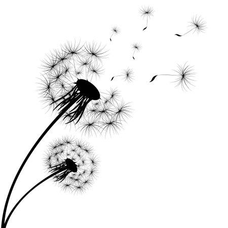 Dandelion on white background. Vector illustration  イラスト・ベクター素材