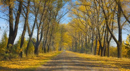 Autumn road stretching into the distance among the trees with yellow leaves