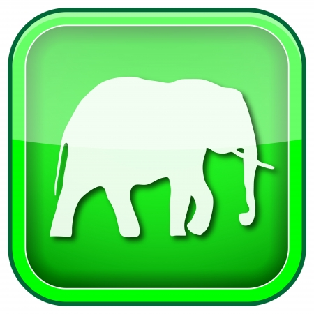 animal welfare: Square shiny icon with white design on green background