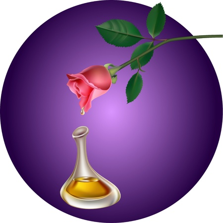 perfum: Perfum drop falls from rose in bottle