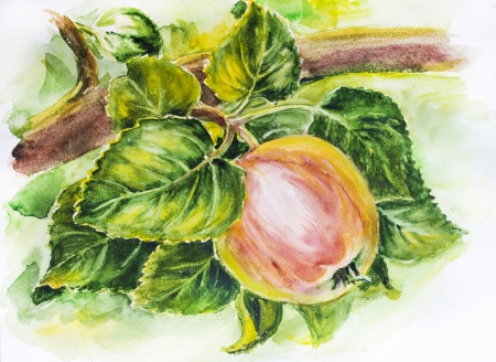 paintings: Ripe red apples on branch  Watercolor