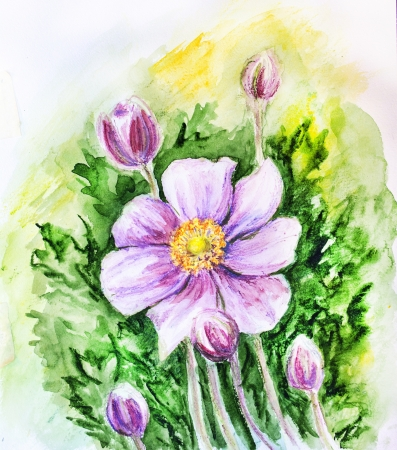 Japanese Anemones flower  Watercolor  photo