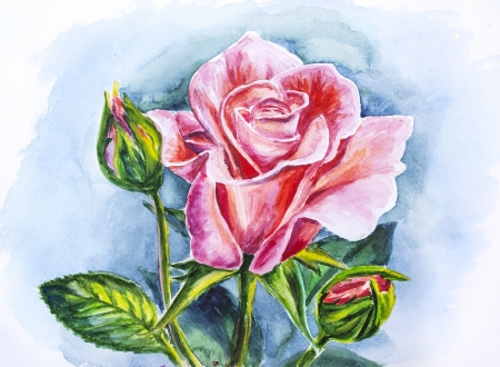 Beautiful rose, watercolor painting photo