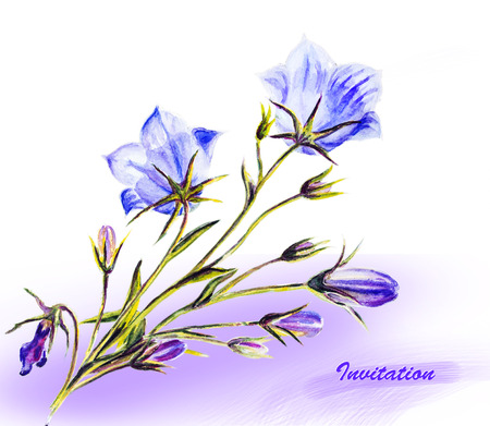 wildflowers: Watercolor painting of the bell flowers Stock Photo