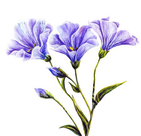 aquarelle: Fleurs sauvages peinture à l'aquarelle
