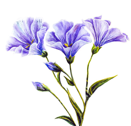 flower drawings: Wildflowers  Watercolor painting