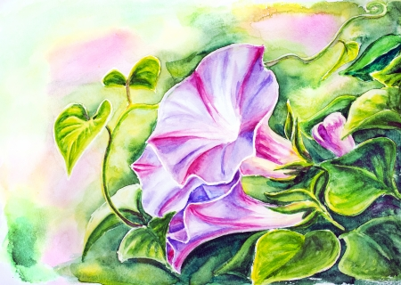 convolvulus: Convolvulus flowers  Watercolor painting  Stock Photo