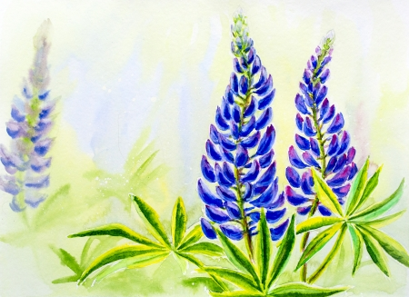 lupine: Lupine flowers, watercolor