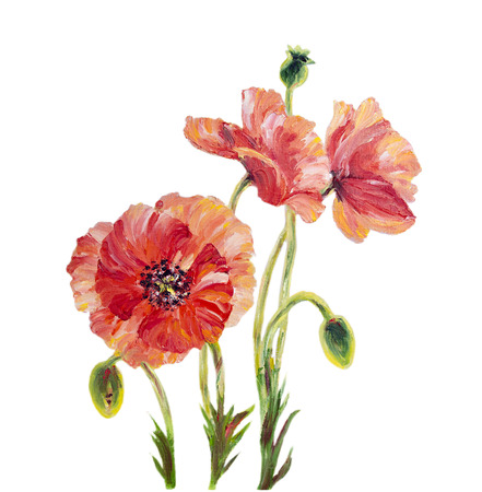 Poppies isolated on white, oil painting photo