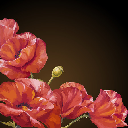 darck: Oil painting. Card with poppies flowers on darck background. Illustration