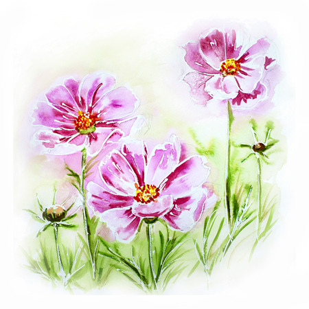 Painted watercolor card with cosmos flowers photo