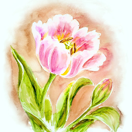 Pink tulips, watercolor painting. photo