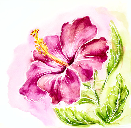 beautiful red hibiscus flower: Pink hibiscus, watercolor painting.