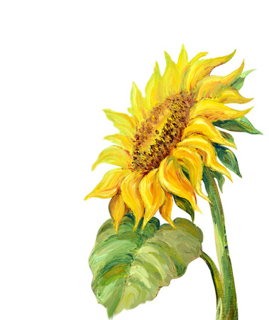 Sunflower isolated on white,  oil painting photo