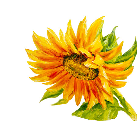 sunflower drawing: Sunflower isolated on white,  oil painting