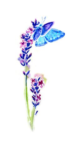 schmetterlinge blau wasserfarbe: Sommer Lavendel-Blumen und Schmetterlinge isoliert auf weiß, Aquarell Lizenzfreie Bilder