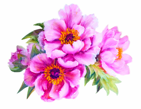 oil painting: Peonies isolated on white, oil painting