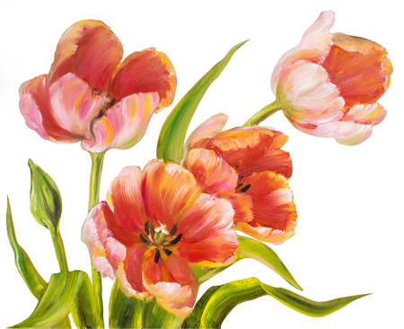 tulip: Vintage red tulips isolated on white. Oil painting.