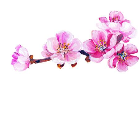 Sakura Frühlingsblumen isoliert auf weiß. Ölgemälde
