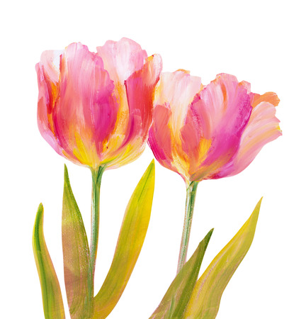 tulipan: Vintage różowe tulipany na białym tle. Obraz olejny. Zdjęcie Seryjne