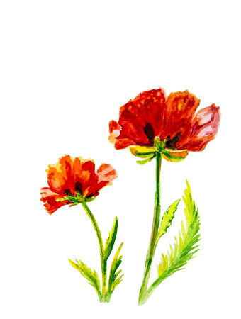 two stroke: Poppies on green watercolor painting