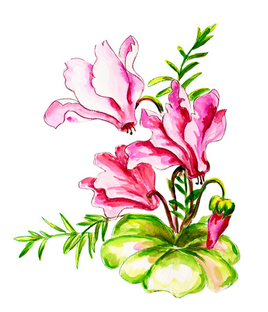 cyclamen: Cyclamens isolated on white Watercolor painting
