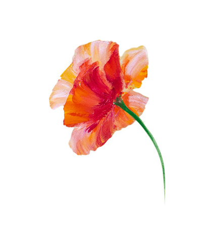 plant oil: Poppy isolated on white oil painting Stock Photo