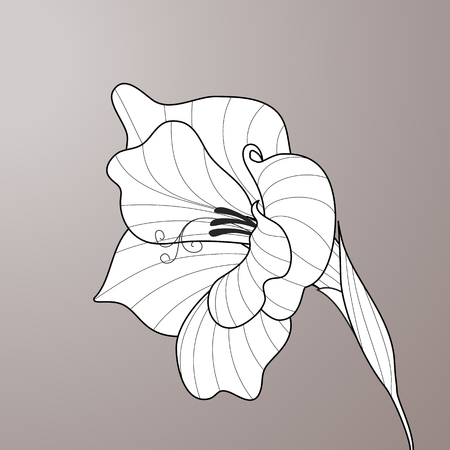 Black and white line-art vector. Flower gladiolus. Contour graphic art