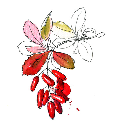 watercolor painting: Hand drawn sketch of barberry branch colored watercolor and blots Stock Photo