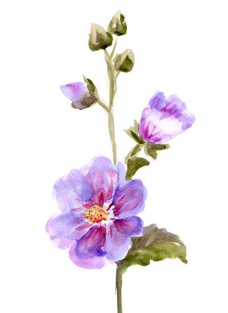 Pink Mallow Flowers.  Watercolor hand painted illustration Reklamní fotografie