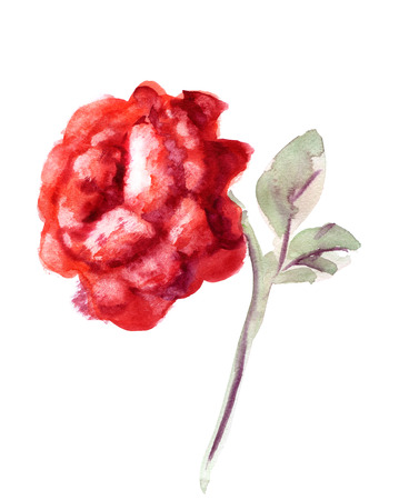 red rose: Beautiful Red Rose flower, watercolor wet drawing illustration Stock Photo