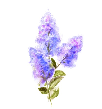 purple flowers: Hand Painted Watercolor Flower Lilac isolated on white. Wet painting illustration