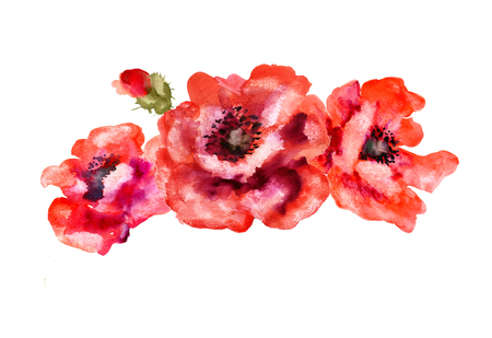 watercolor painting: Hand Painted Watercolor Flower Poppy isolated on white. Wet painting illustration