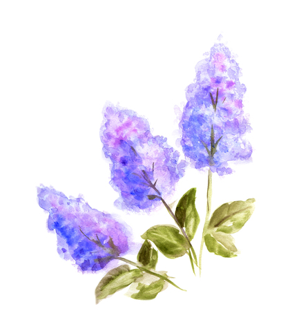 purple flowers: Hand Painted Watercolor Flower Lilac. Wet painting illustration