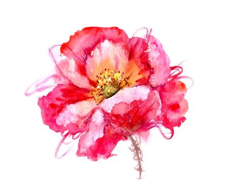 Pintado a mano de la acuarela de la flor de la amapola. Ilustración mojado pintura