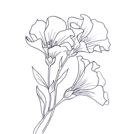 Line-Tintenzeichnung Blume mit Schmetterling. Schwarze Kontur auf weißem Hintergrund