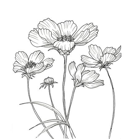 Line inkttekening van de kosmos bloem. Zwarte contour op een witte achtergrond