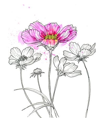 kosmos: Linienzeichnung Kosmos flowerwith Aquarell. Schwarze Kontur auf weißem Hintergrund Lizenzfreie Bilder